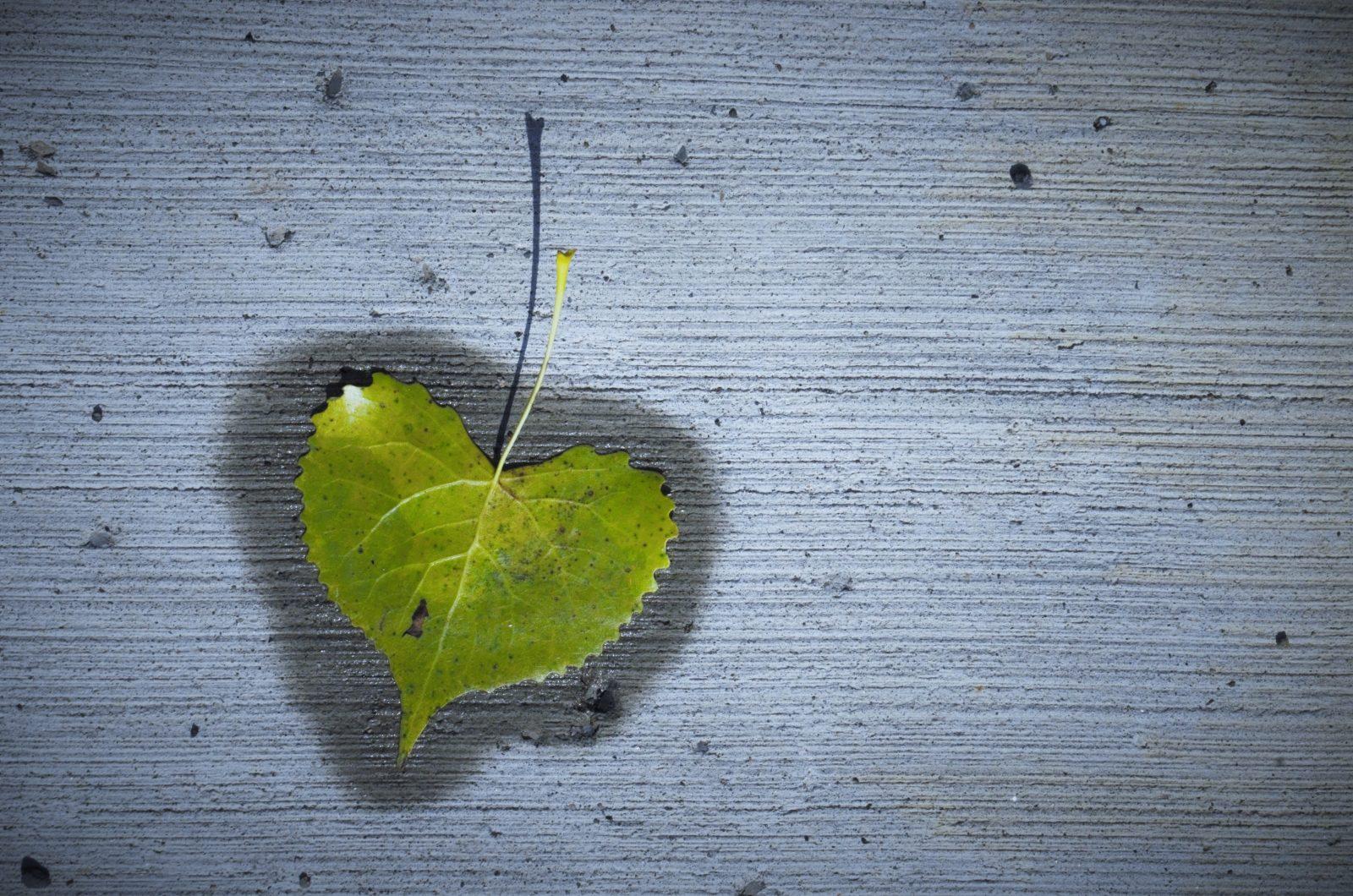 Leaf It To Me