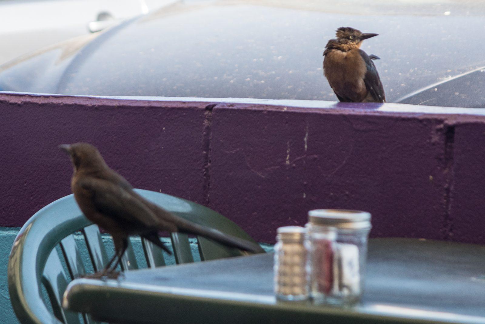 Bird Lunch