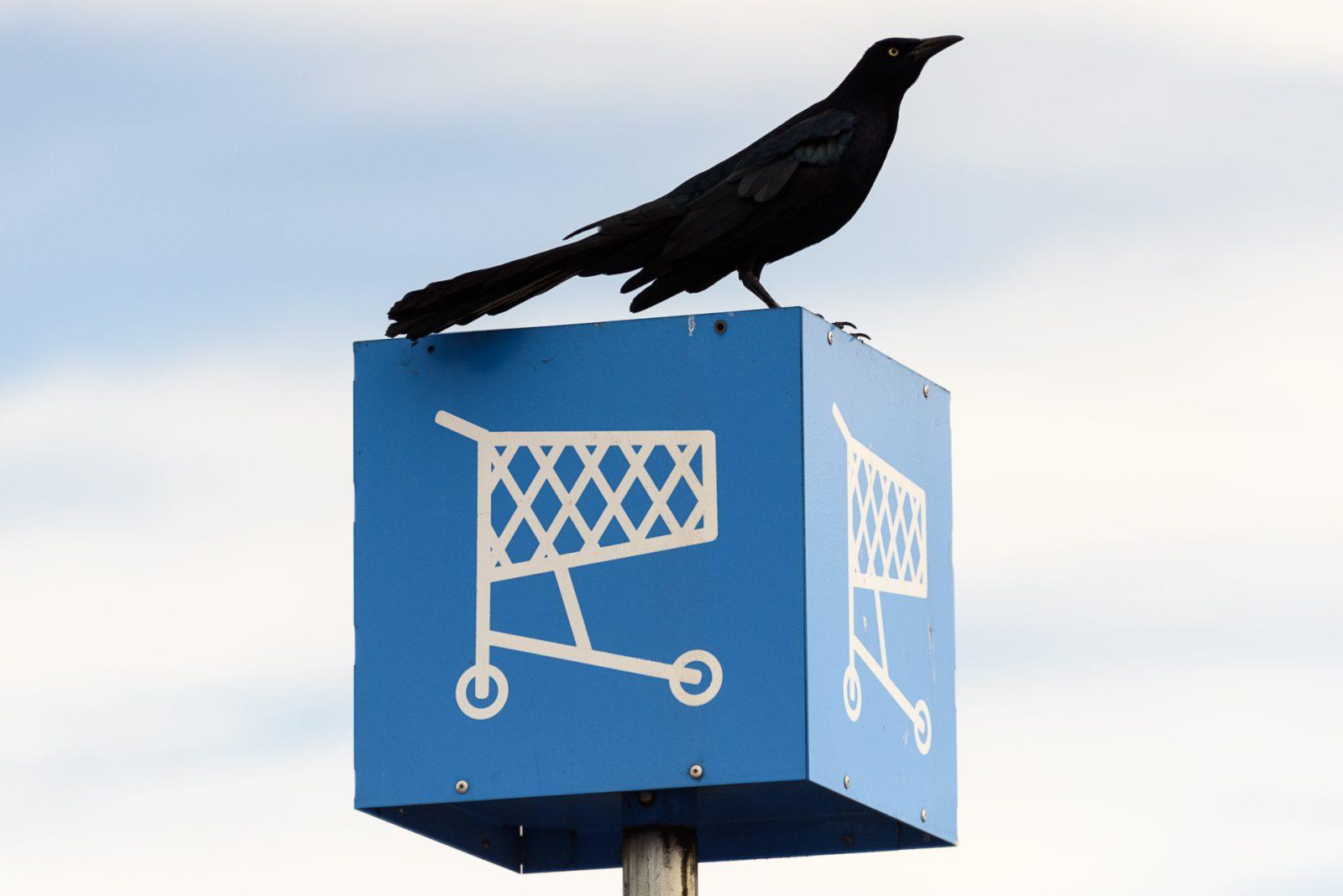 Cart Grackle